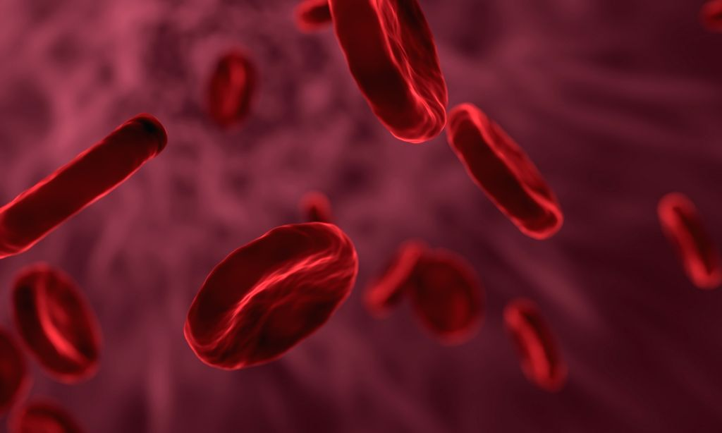 Red blood cells.