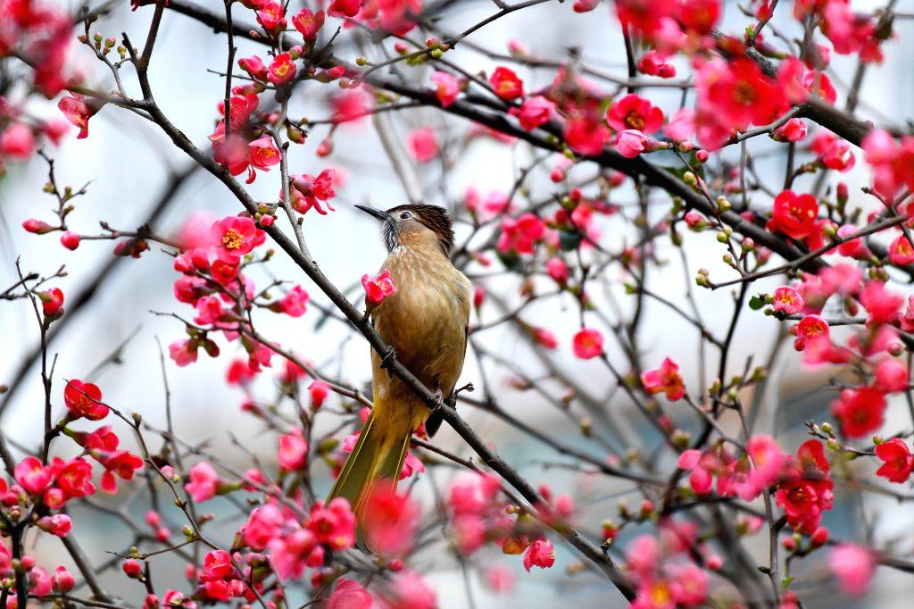RENHUAI, Feb. 6, 2019 - A bird perches on a branch in Renhuai City, southwest China's Guizhou Province, Feb. 6, 2019.