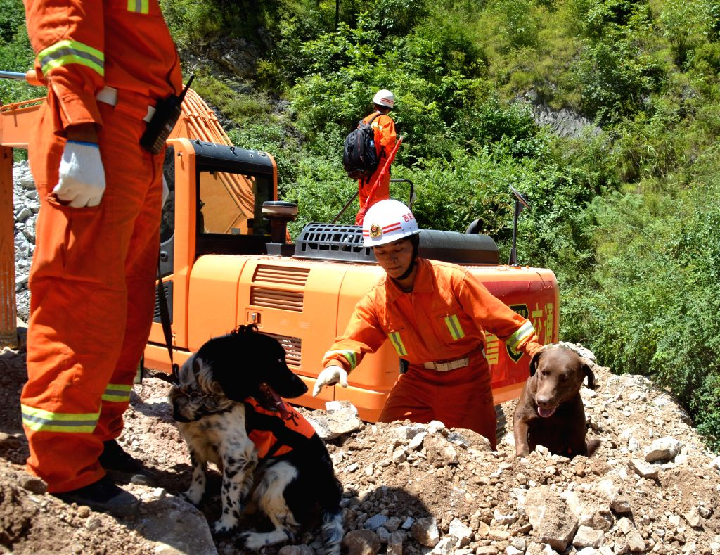 Rescue dogs search at the landslide site in Shanyang County of Shangluo City, northwest China's Shaanxi Province, Aug. 15, 2015. Rescue opeartion of the landslide ...