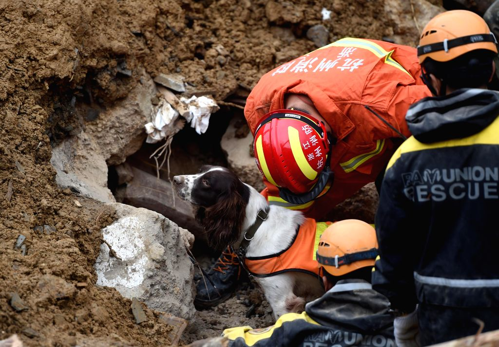 Rescuers and a sniffer dog search for survivors at the site of a landslide in Lidong Village of Yaxi Township in Lishui, east China's Zhejiang Province, Nov. 14, ...