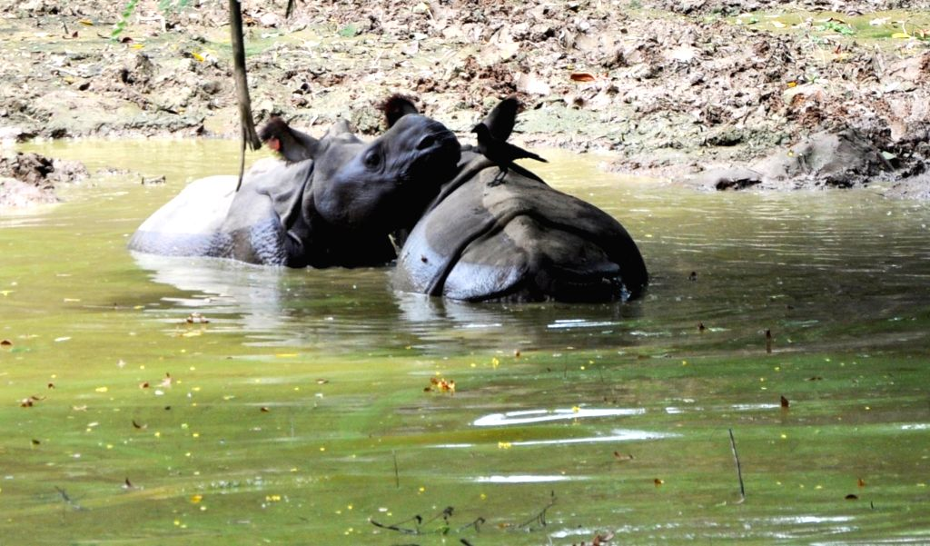 Rhino calves take bath in their enclosure at Assam State Zoo cum Botanical Garden in Guwahati on Aug 5, 2019.