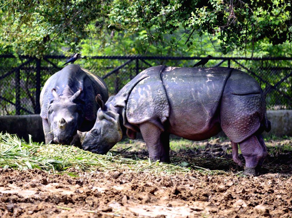 Rhinos inside their enclosure at Sanjay Gandhi Jaivik Udyan in Patna on Sep 23, 2019.