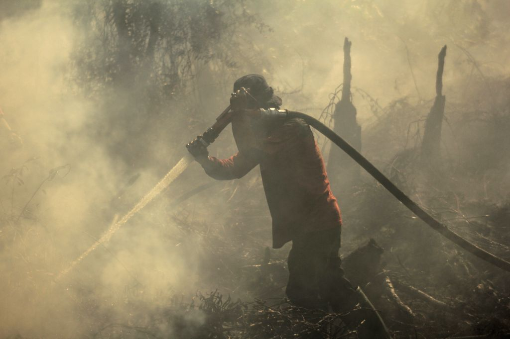 RIAU, Aug. 2, 2019 - An Indonesian firefighter from Regional Mitigation Disaster Management Agency of Pekanbaru tries to extinguish peatland fire at Pekanbaru, Riau, Indonesia, Aug. 2, 2019. The ...