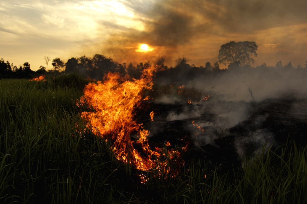 RIAU, July 20, 2019 - Photo taken on July 20, 2019 shows peatland fire at Payung Sekaki, Pekanbaru, Riau, Indonesia. A joint team from local firefighters, police and military officers tried to ...