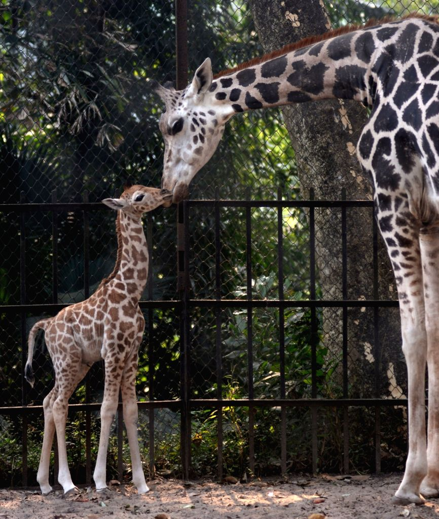 RIL to set up world's largest zoo in Gujarat