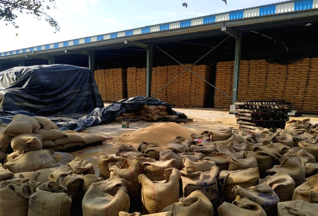 Rohtak: Food grains left in the open ahead of Monsoon at a wholesale foodgrain 'mandi' in Rohtak, on June 21, 2019. (Photo: IANS)