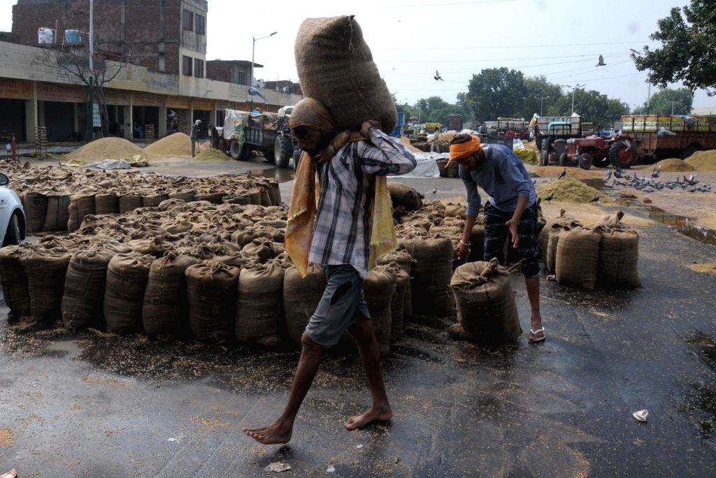 Sacks of freshly harvested food grains being shifted after they got damaged during rains in Amritsar on Sep 27, 2019.