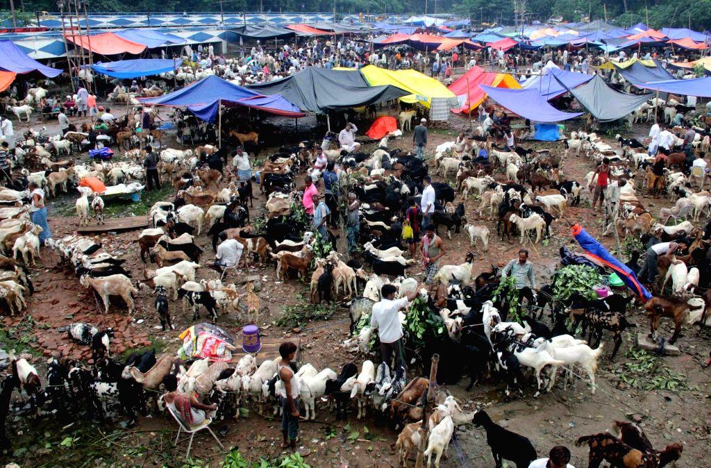 Sacrificial animals being sold at a Kolkata market ahead of Eid al-Adha on Sept 12, 2016.