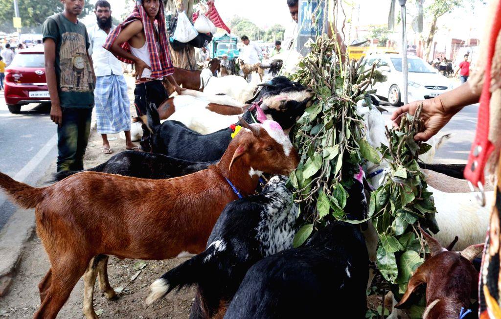 Sacrificial goats at a cattle market near Jama Masjid ahead of Eid al-Adha on Sept 11, 2016.