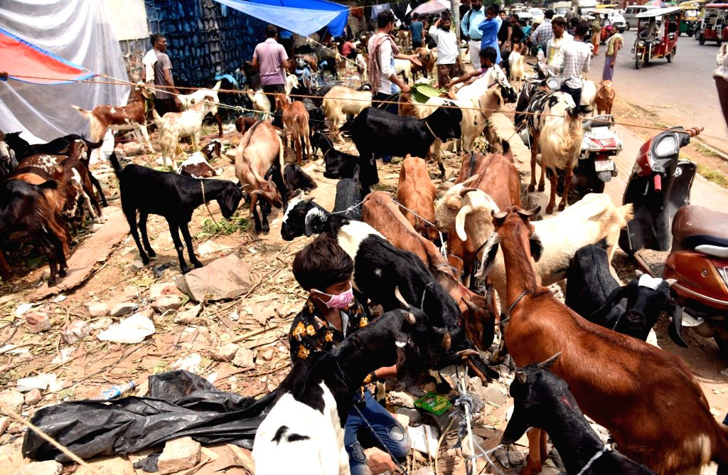 Sacrificial goats on sale at a goat market near Ram Leela Ground ahead of Eid-Ul-Adha celebrations, in New Delhi on July 30, 2020.