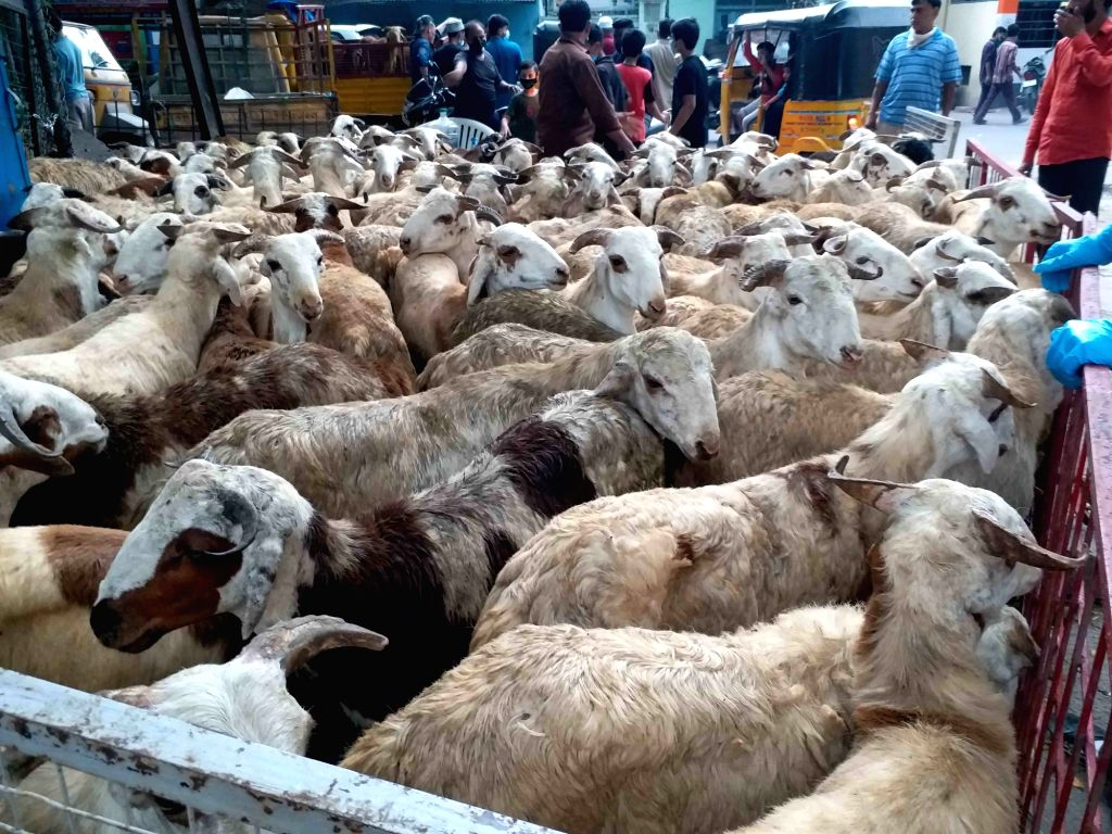 Sacrificial goats on sale at a livestock market on the eve of Eid-Ul-Adha in Hyderabad on July 31, 2020.