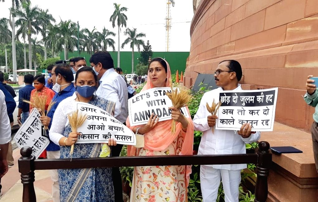 SAD-BSP MPs hand over wheat stalks to parliamentarians