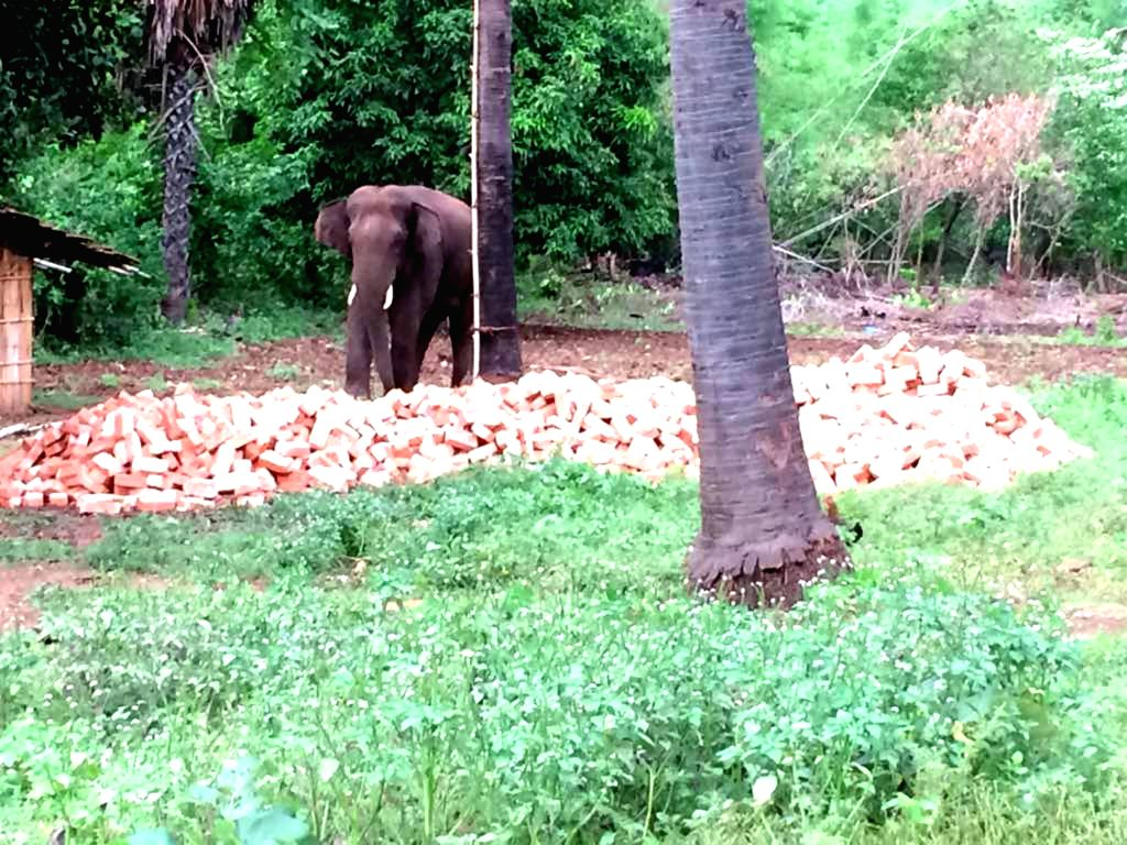 Sahibganj: The rogue elephant that has killed 10 people in Sahibganj district of Jharkhand since crossing over from neighbouring Bihar. The tusker has struck terror in large swathes of the tribal state, prompting the government to requisition the ser