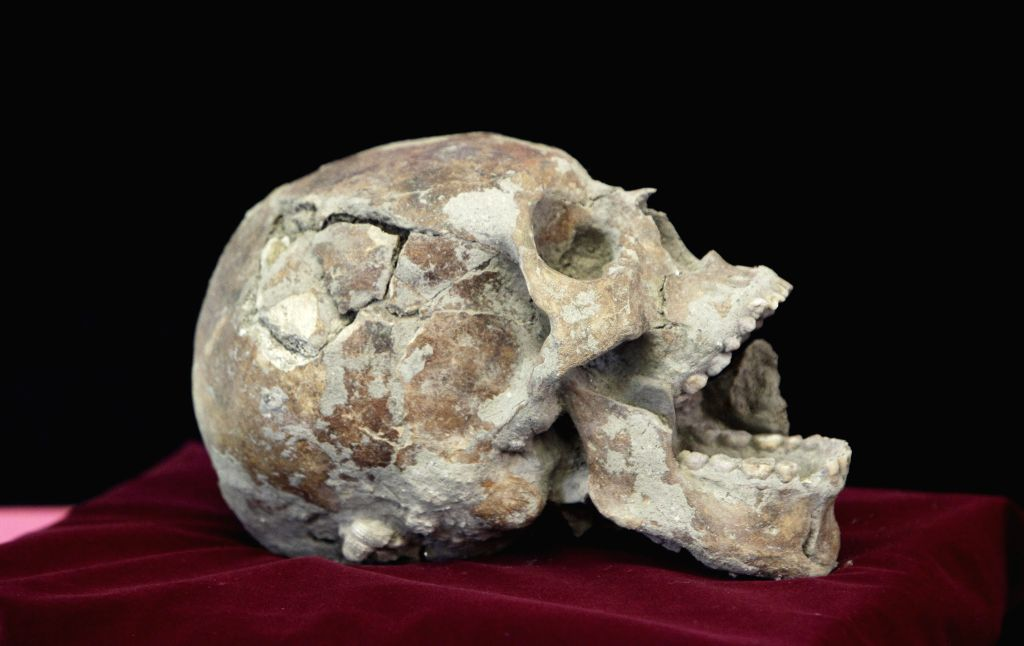 A skull of more than 1,600 years old is exhibited in the National Museum of Antropology, in the city of San Salvador, capital of El Salvador, on July 4, 2014. ..