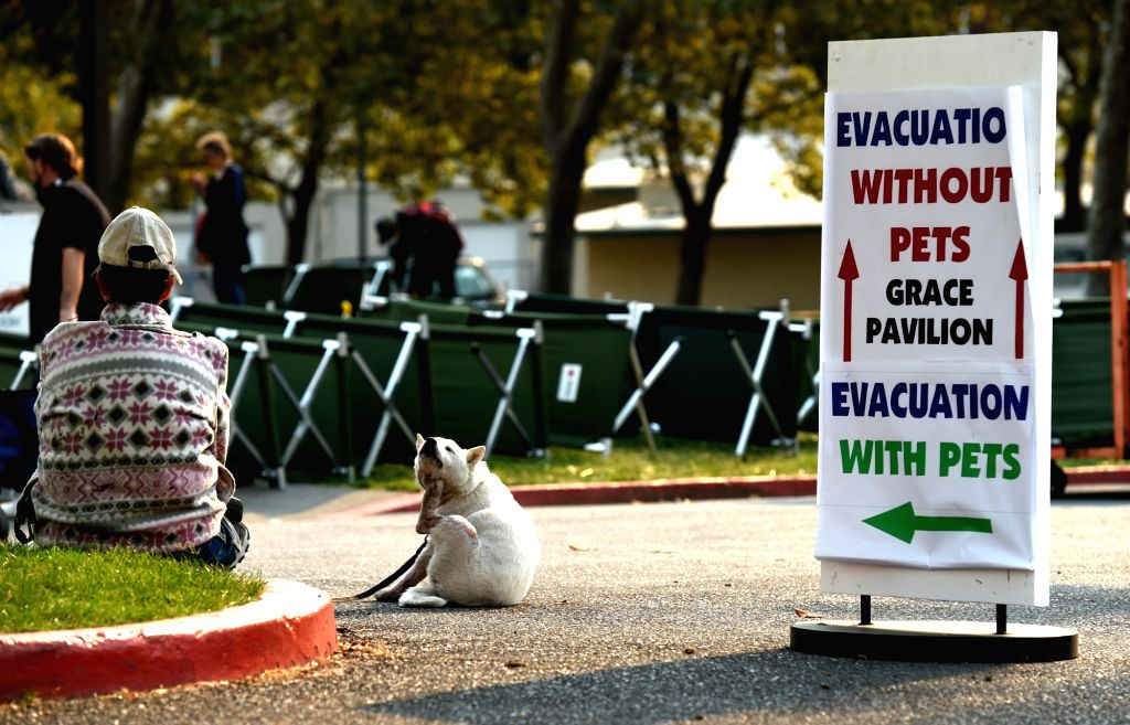 SANTA ROSA (U.S.), Oct. 12, 2017 A woman with her dog rests at a temporary settlement in Santa Rosa, California, the United States, on Oct. 11, 2017. California Governor Jerry Brown ...