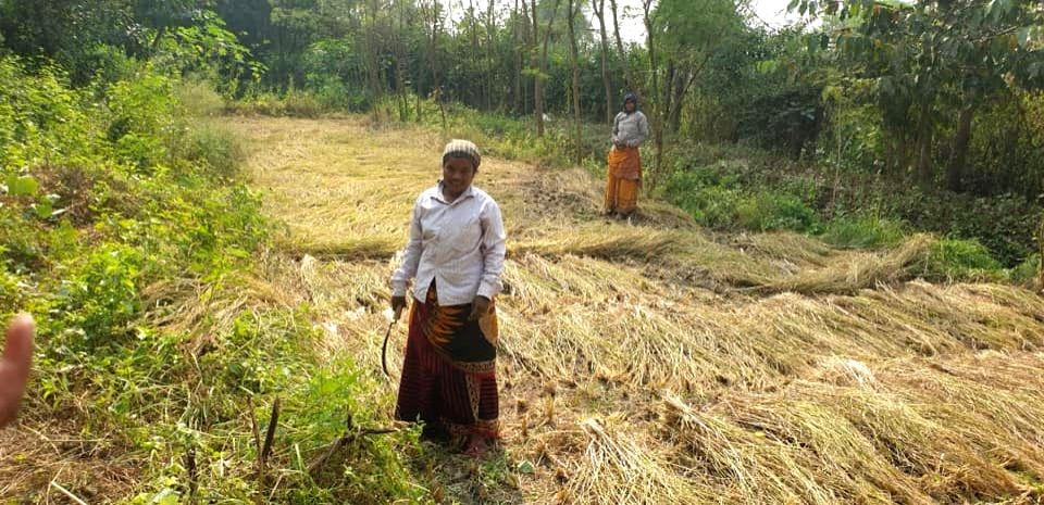 Santhals of Bengal go back to their roots, champion agriculture that nurtures ecosystems.