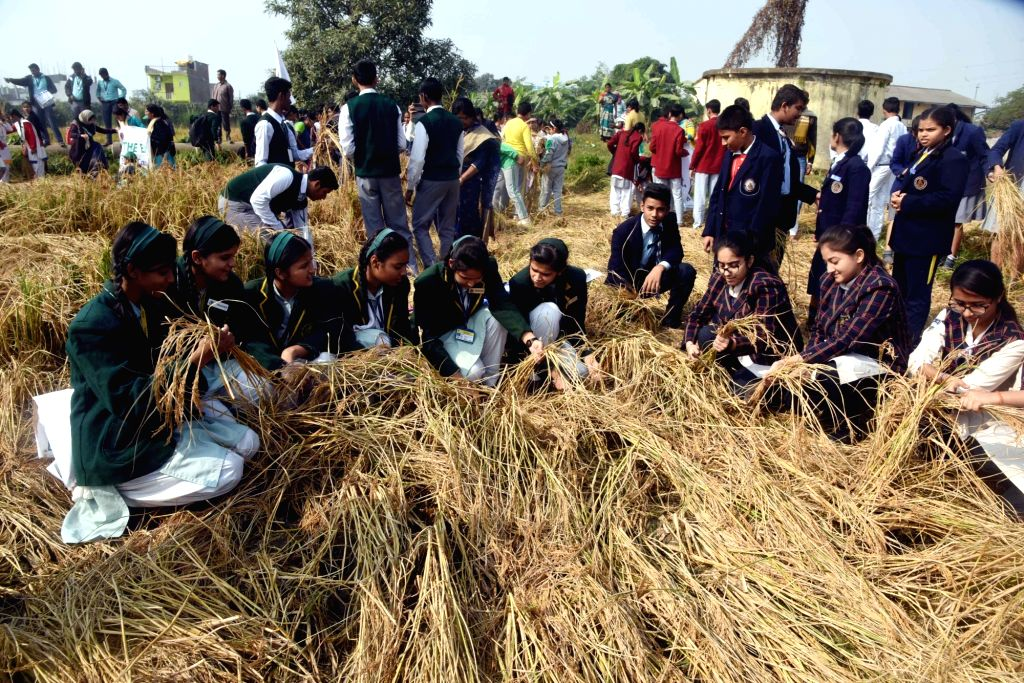 School students during organic rice harvesting festival at Tarumitra in Patna on Dec 4, 2019.
