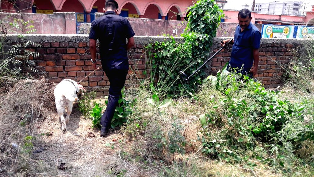 Security personnel use a sniffer dog as they carry out investigation at the spot where an explosion took place near a government school in Danapur, Patna on June 6, 2018.