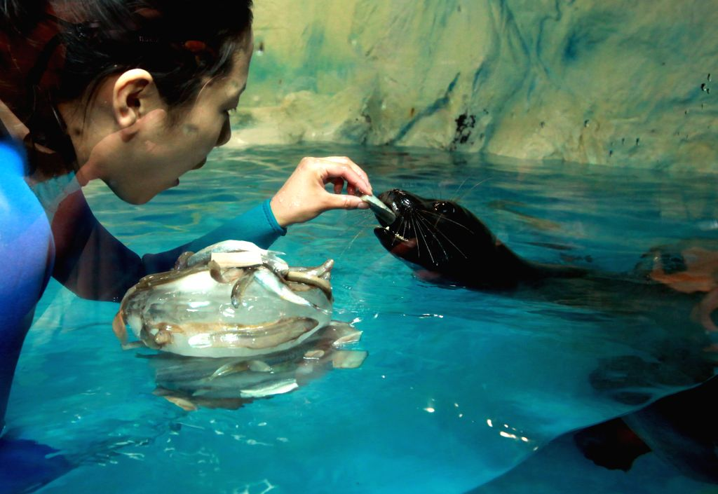 A zookeeper feeds a baikal seal with a piece of watermelon to help them it escape the summer heat at the 63 Seaworld in Seoul, South Korea, July 16, 2014. ...