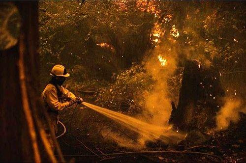 Seven people dead in Oregon wildfires
