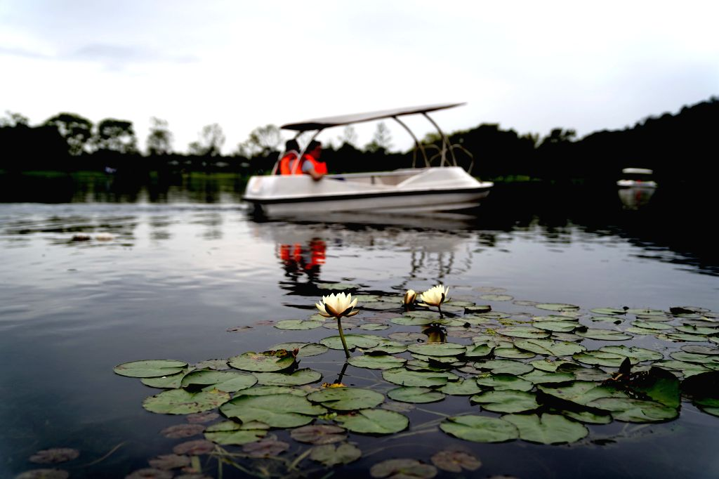 SHANGHAI, Oct. 7, 2019 - Tourists visit Shanghai Chenshan Botanical Garden by boat in east China's Shanghai, Oct. 6, 2019.