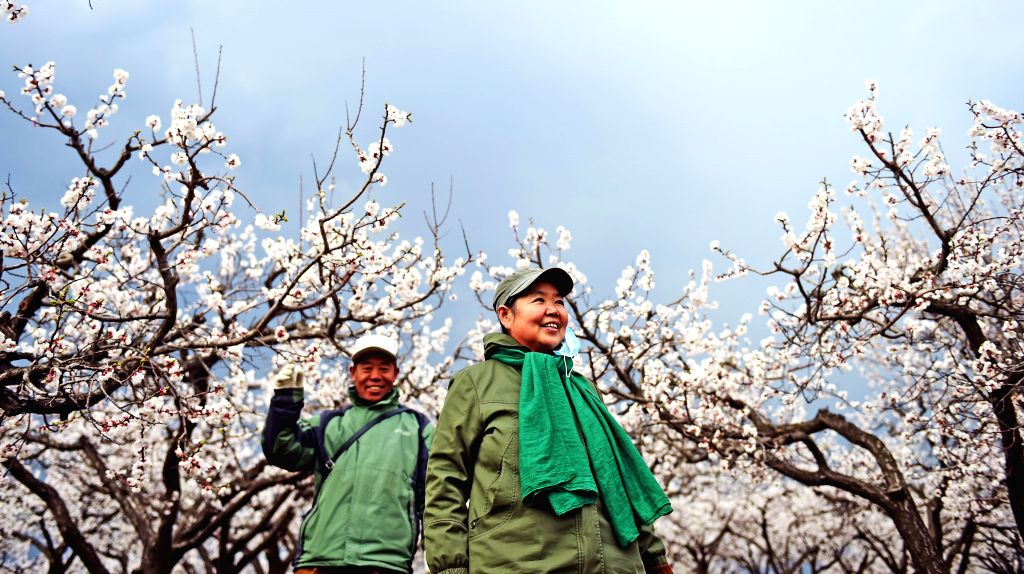 SHENYANG, April 19, 2016 - Tourists view apricot flowers in Shadigou Village of Hunnan District in Shenyang City, capital of northeast China's Liaoning Province, April 18, 2016.