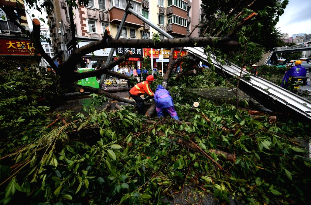 SHENZHEN, Sept. 17, 2018 - People clear fallen trees in Futian District of Shenzhen, south China's Guangdong Province, Sept. 17, 2018. Local meteorological authority cancelled the yellow warning ...