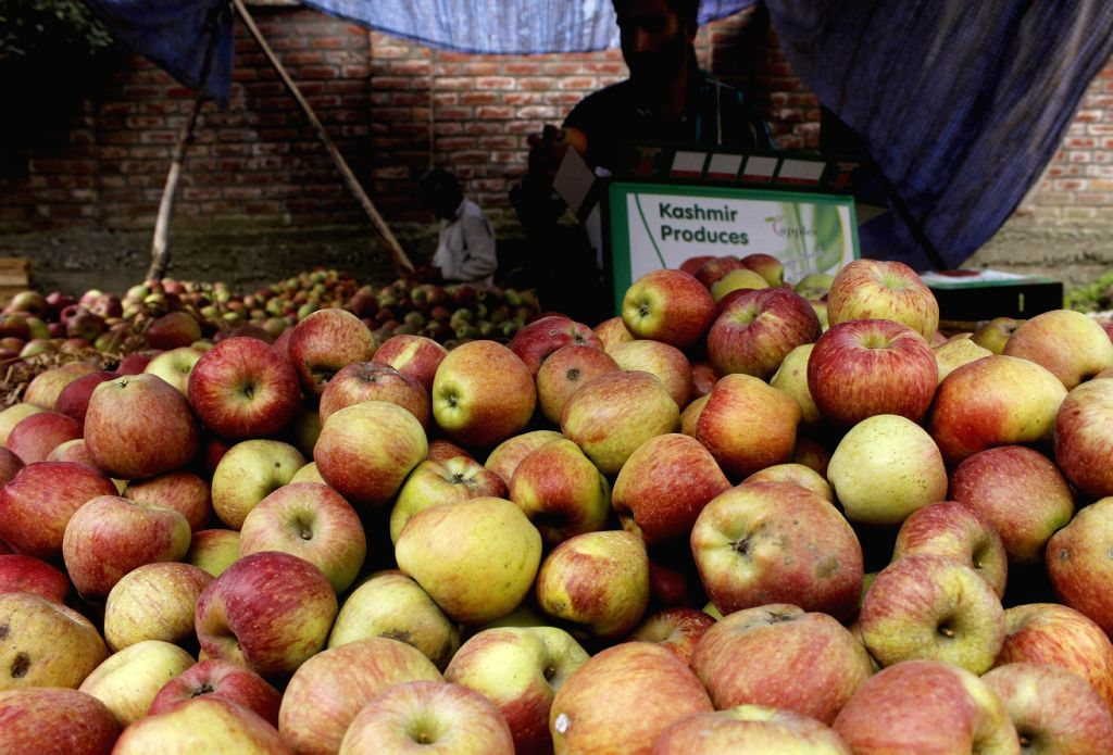Farmers pack apples before exporting them to foreign countries in Shopian district of Jammu and Kashmir on Nov 18, 2014.