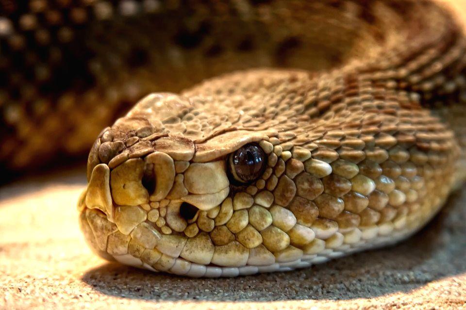 Snake. (Photo: IANS)