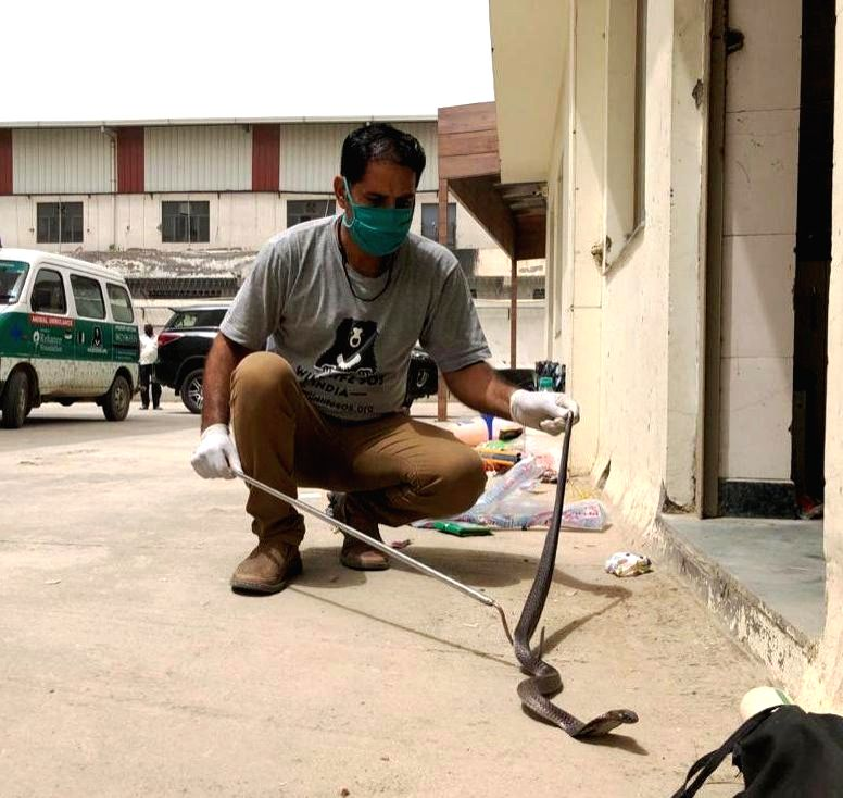 Snakes rescued by Wildlife SOS from various places in Agra