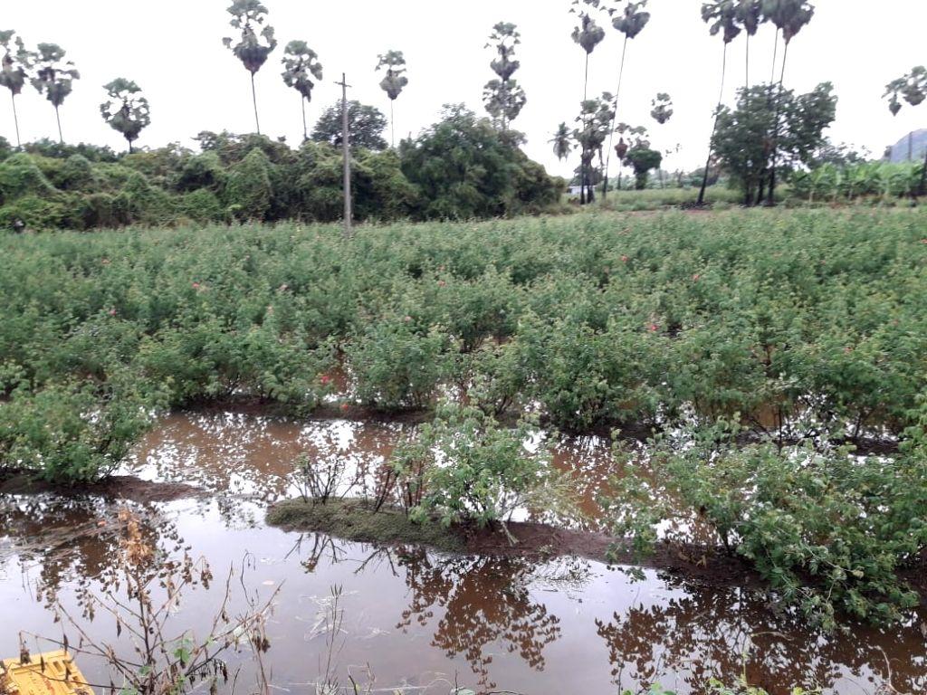 Southwest monsoon lashes coastal Andhra, Rayalaseema