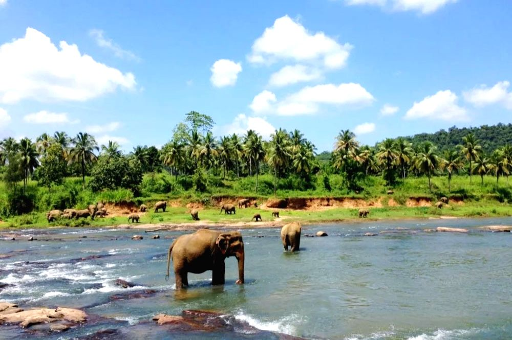 Sri Lanka: Tourism promotion campaign will be started in 12 countries including China.