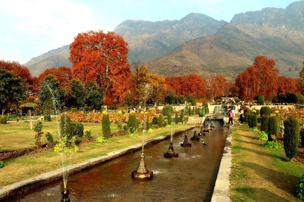 Srinagar: A view of the Nishat Bagh in Srinagar on Nov 15, 2015.