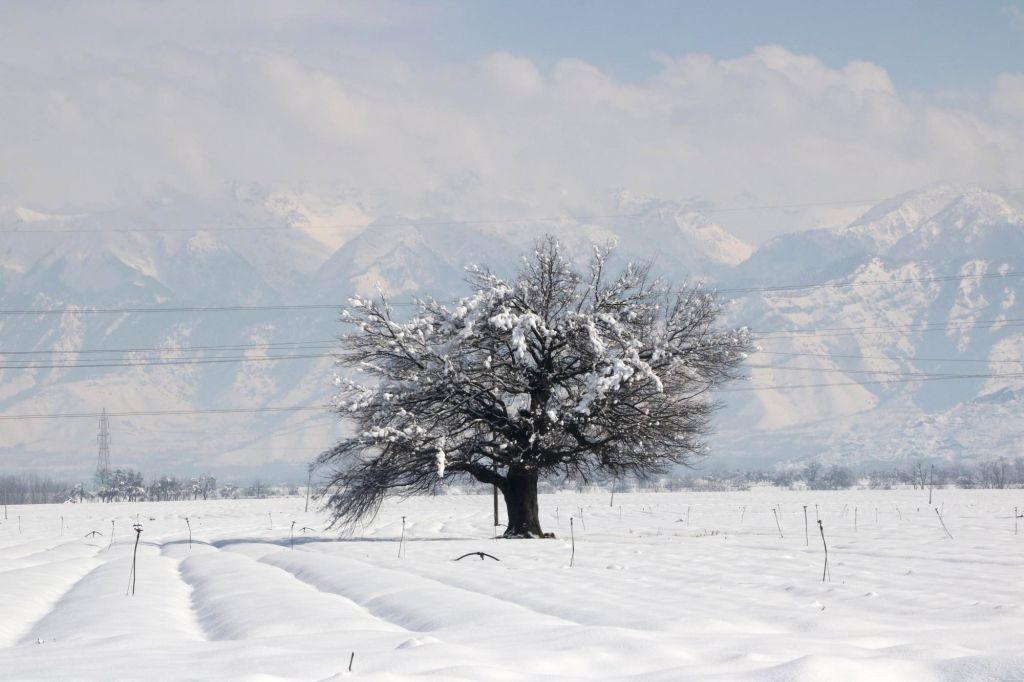 Srinagar: Srinagar receives fresh snowfall, on Feb 9, 2019. (Photo: IANS)