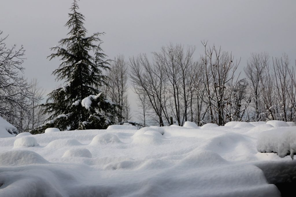 Srinagar: Srinagar receives heavy snowfall, on Feb 8, 2019. (Photo: IANS)