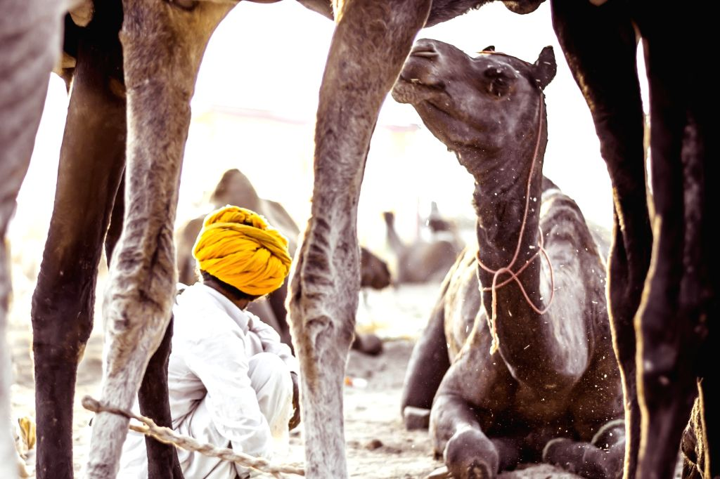 Steering into the 'soul of Pushkar'.