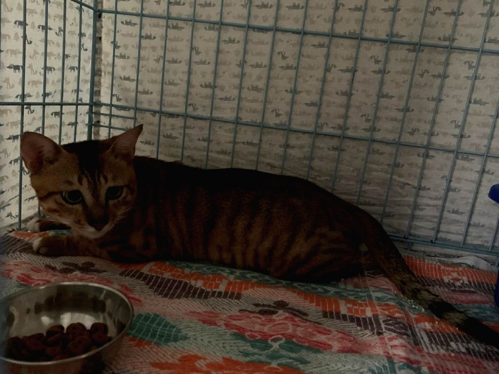 Stowaway Cat from China freed after 3 months in quarantine.