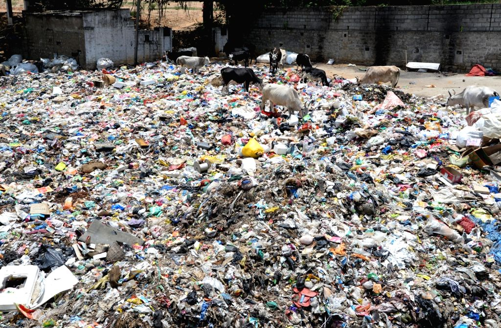 Stray cattle search for food in a heap of garbage at a dumpyard at Kumblagodu Village, Myrusu Road in Bengaluru during the extended nationwide lockdown imposed to mitigate the spread of ...