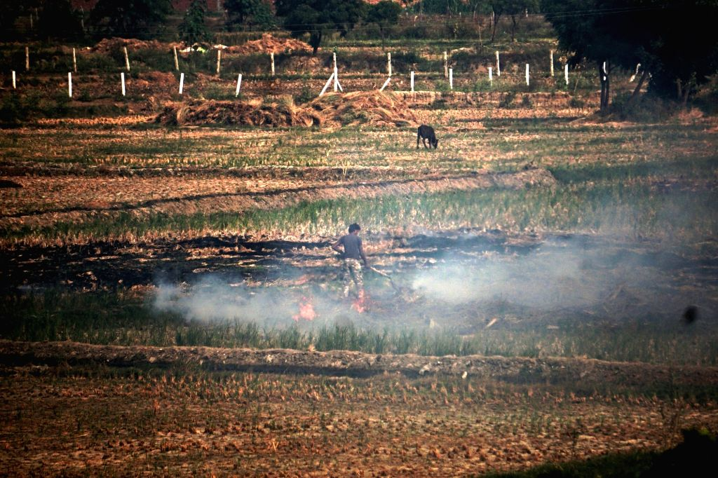 Stubble being burnt at an agricultural field along the Yamuna Expressway near Uttar Pradesh's Jewar.