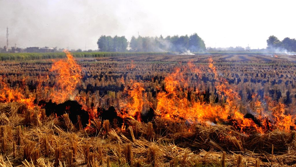Stubble being burnt in a field on the outskirts of Amritsar on Oct 13, 2017.