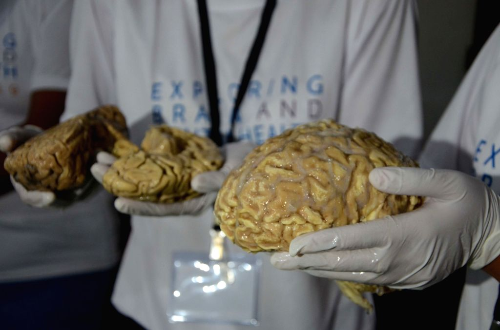 "Students during an exhibition titled ""Exploring Brain and Mental Health"" at Nehru Science Centre (NCSM) in Mumbai on Feb 11, 2019."