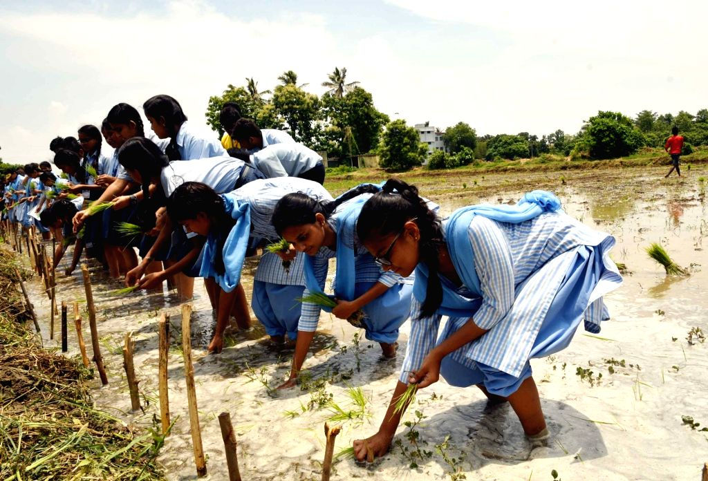 Students learn how to transplant paddy sapling in a filed, in Lakhisarai district of Bihar, on July 13, 2018.