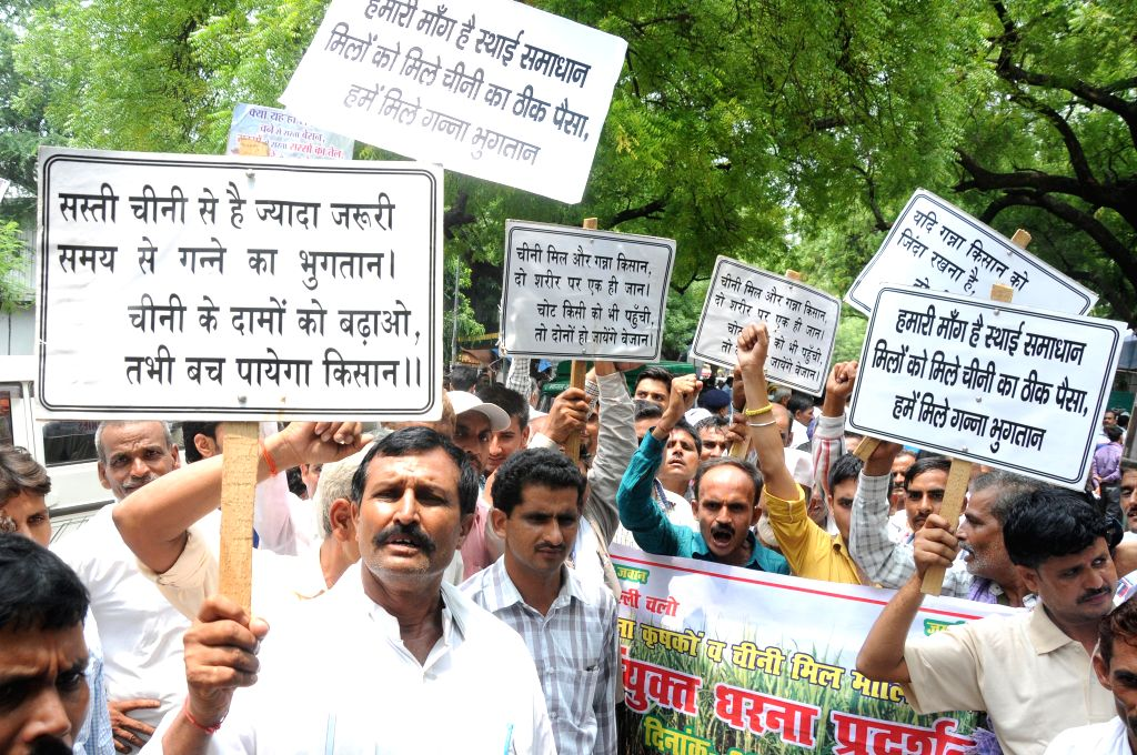 Sugarcane farmers stage a demonstration to press  for their demands at Jantar Mantar in New Delhi on Aug 4, 2015.