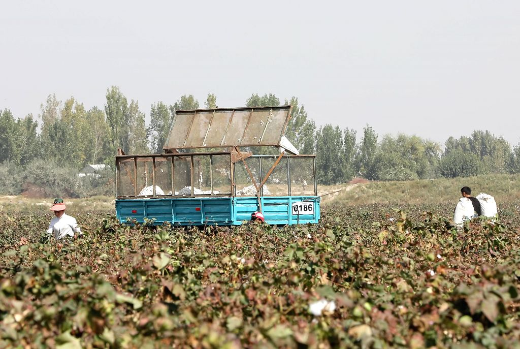SYRDARYA, Sept. 28, 2019 - Workers pick cotton at an industrial park in Syrdarya region, Uzbekistan, Sept. 26, 2019. As the harvest season arrives, people are busy reaping the cotton fields in ...