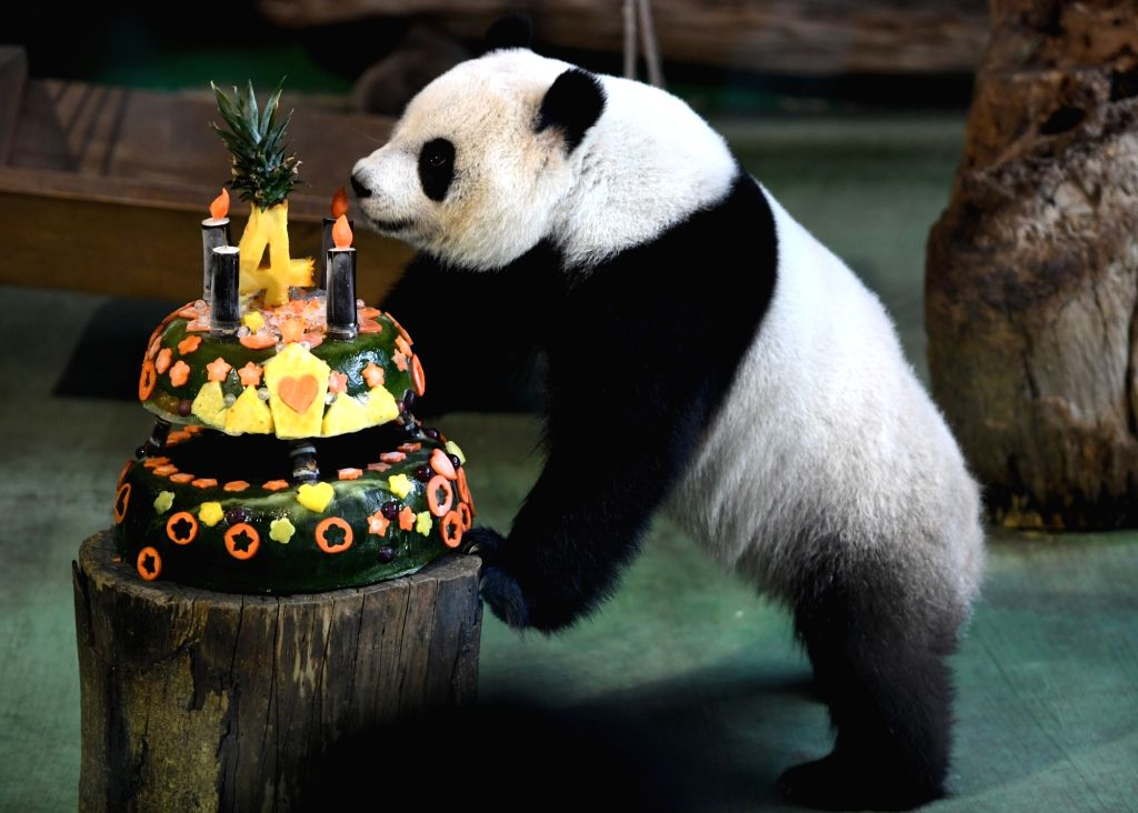 "TAIPEI, July 6, 2017 - Giant panda ""Yuan Zai"" enjoys a birthday cake at the Taipei Zoo in Taipei, southeast China's Taiwan, July 6, 2017. The zoo on Thursday celebrated the fourth birthday ..."