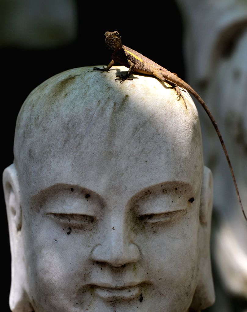 A Taiwan endemic lizard basks in the sun on a Buddhist statue at the Fo Guang Shan monastery in Kaohsiung, southeast China's Taiwan, Sept. 5, 2014. (Xinhua/Wang ...