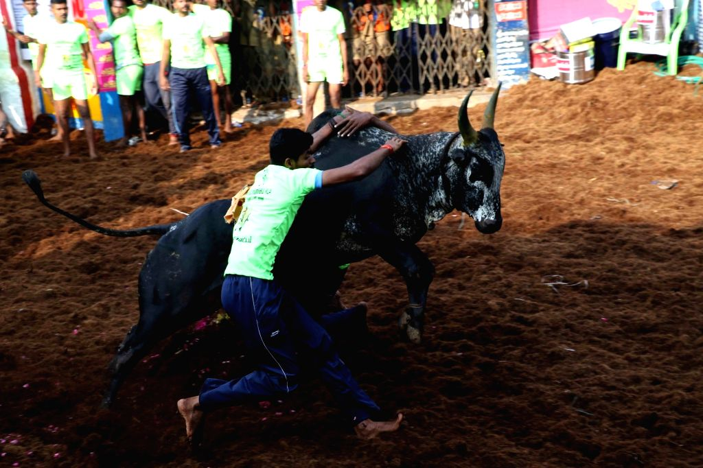 Tamil Nadu's traditional bull taming sport Jallikattu underway at Alanganallur village in Tamil Nadu's Madurai District on Jan 16, 2018.