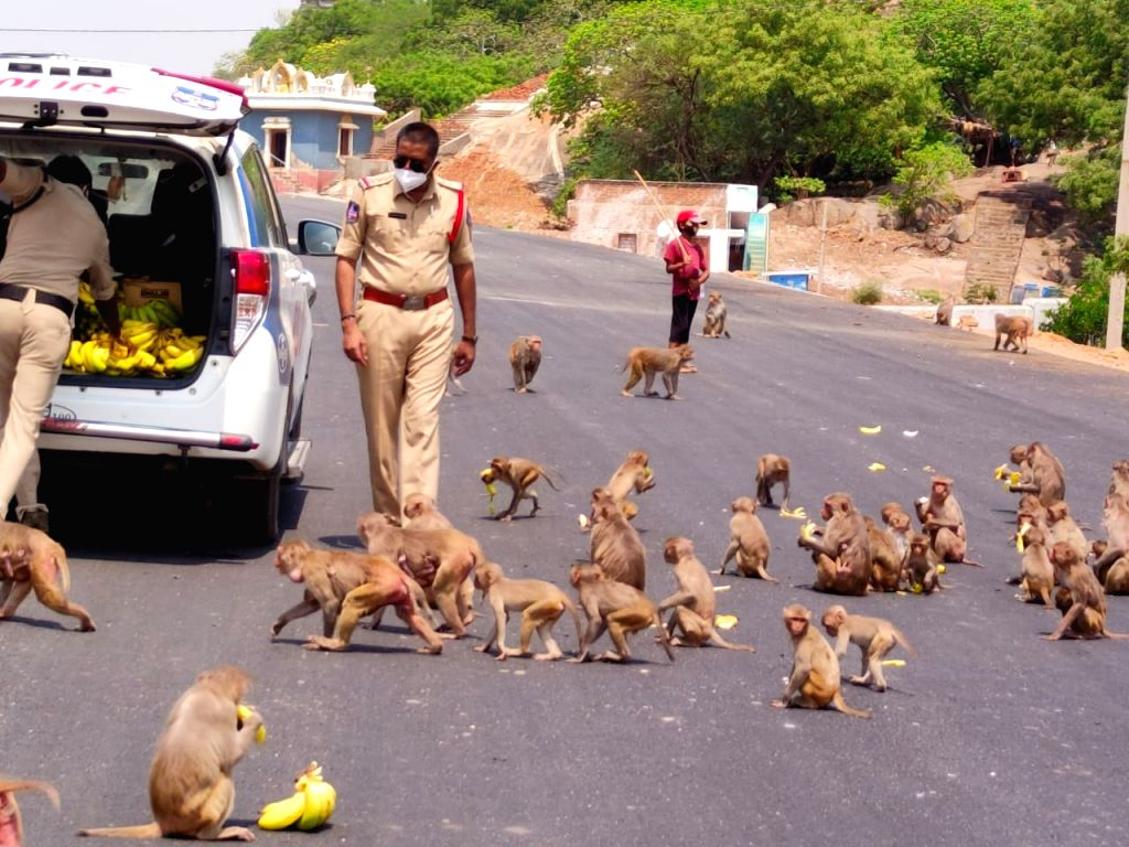 Telangana cop feeds hungry monkeys during lockdown