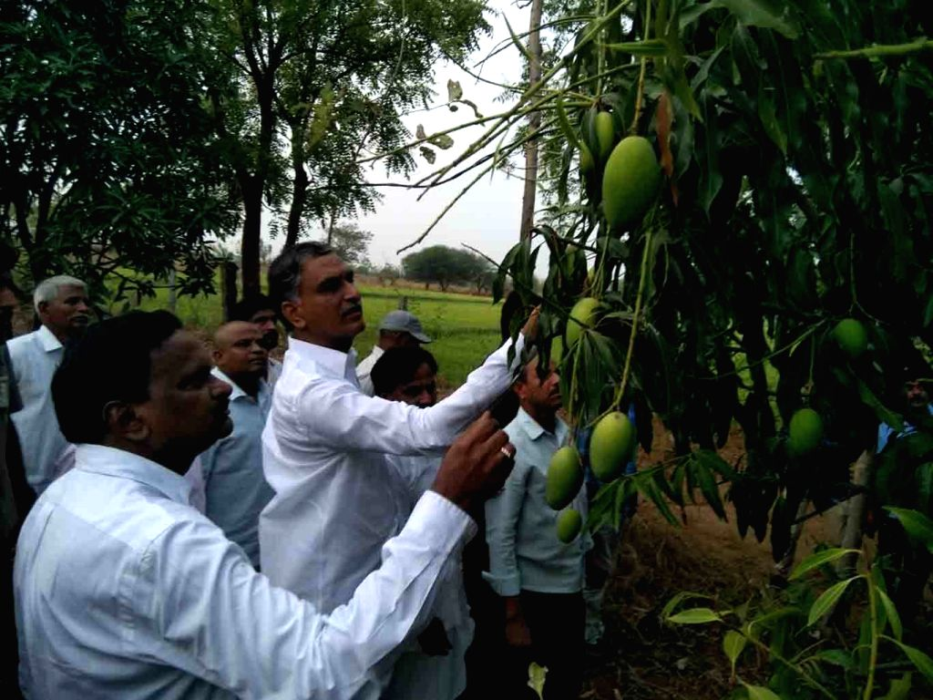 Telangana Irrigation Minister T. Harish Rao during his visit to inspect the crops damaged in unseasonal rains across the state, in Siddipet on April 3, 2018. - T. Harish Rao