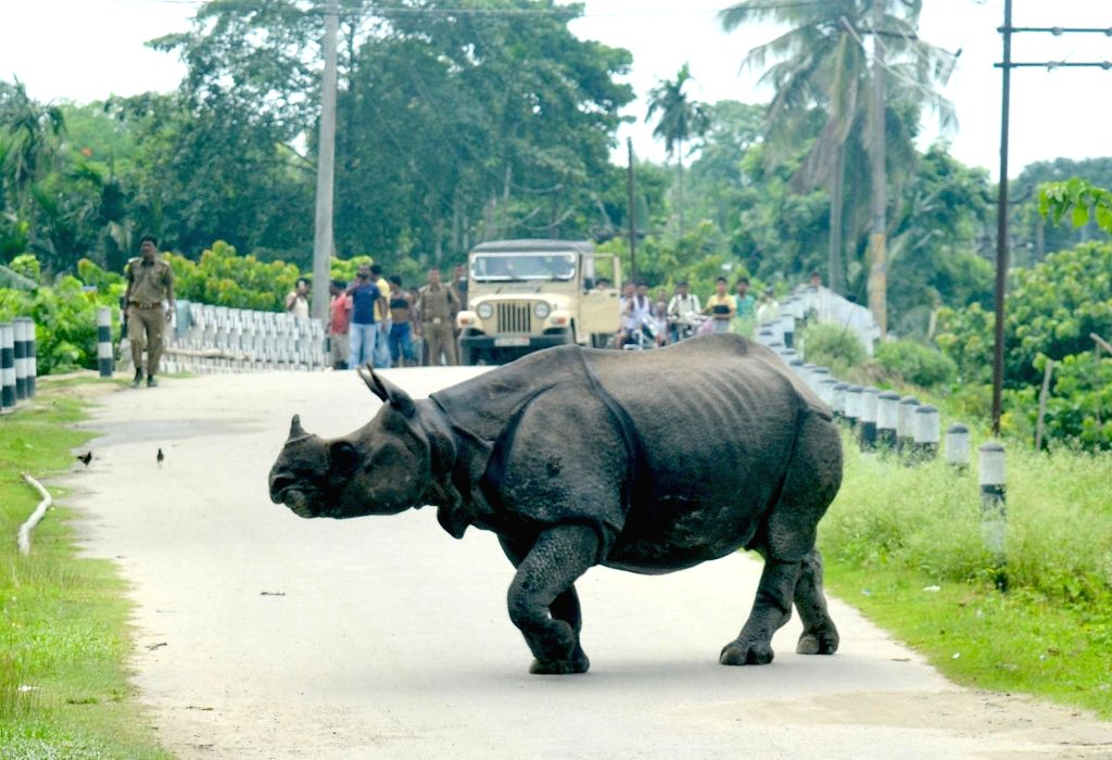 Tezpur: Forest officials drive away a rhino which strayed away from Kaziranga National Park in Tezpur of Assam on June 25, 2016. (Photo: IANS)